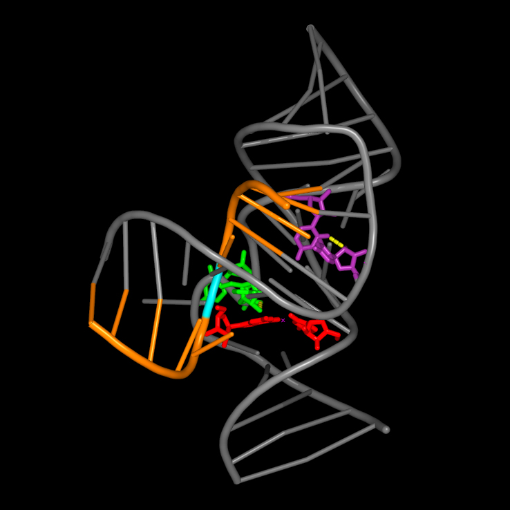 features between a hepatitis delta virus ribozyme and its substrate.